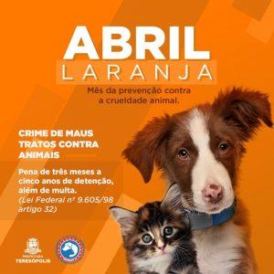 """Campanha """"Abril laranja"""" para prevenção contra a crueldade animal"""
