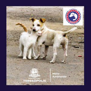 Teresópolis volta a realizar o censo animal